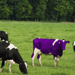 The Top Inspirational Quotes From The Book Purple Cow