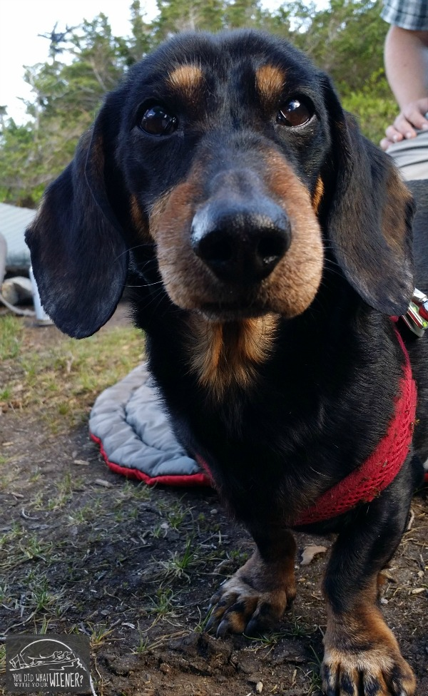 ... Dogs: What to Do if Your Dog Has an Allergic Reaction to a Bug Bite