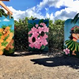 Dole Plantation Travel Budget Guide To Oahu