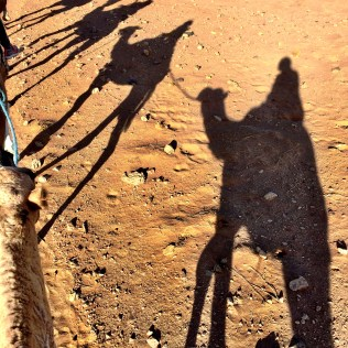 silhouette of camels riding through Zagora Desert