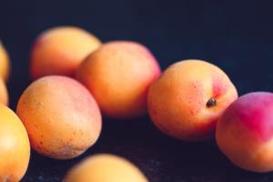 Apricots fruit starting with a