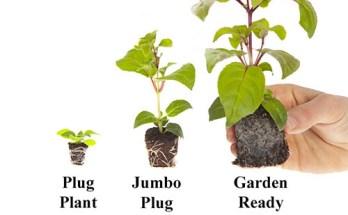 Plug Plant Size Guide