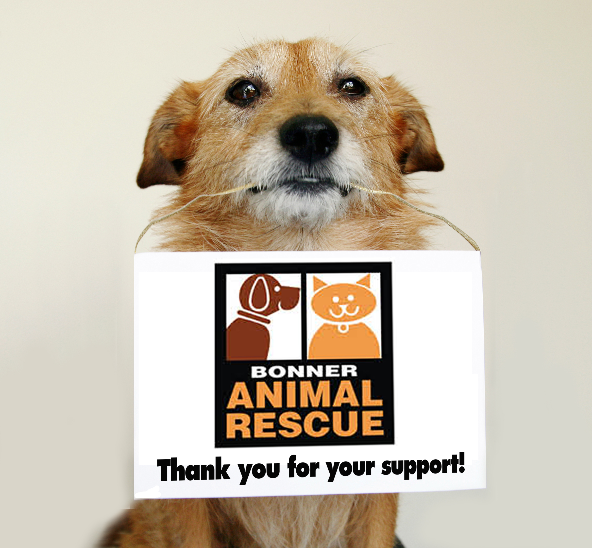 Help Us Help Homeless Animals