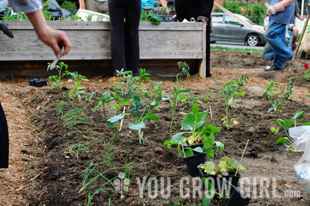 photo by gayla trail all rights reserved - How To Start A Community Garden