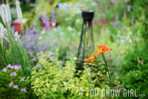 You Grow Girl - The Volunteer Daylily