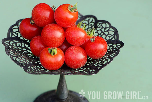 You Grow Girl - Tomatoes Worth Growing: Velvet Red