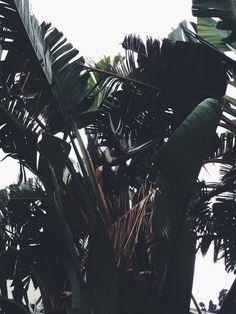 palm - Flowers - boho chic inspiration via youmademelikeyou.com