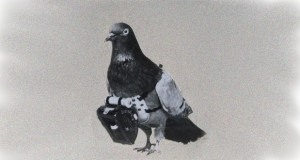 Privacy Pigeon