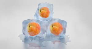 Freeze Peach