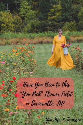 Have You Been to this You Pick Flower Field in Sevierville, TN?
