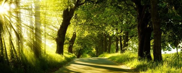 Summer Nature HD Wallpaper For Desktop Background