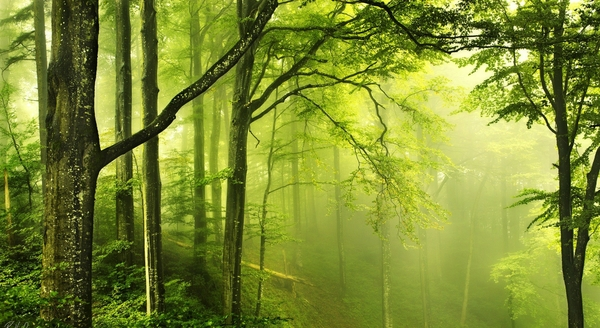 Green Nature HD Wallpaper For Wide Background