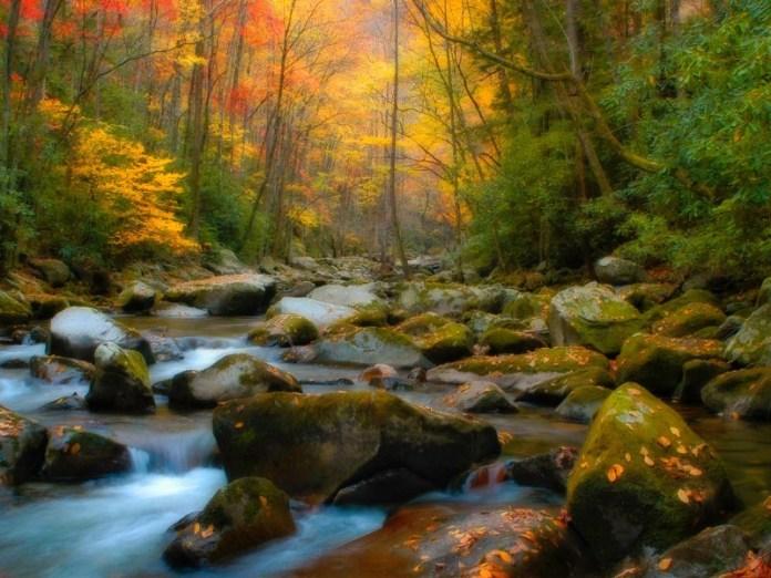 Forest HD Wallpaper For Pinterest