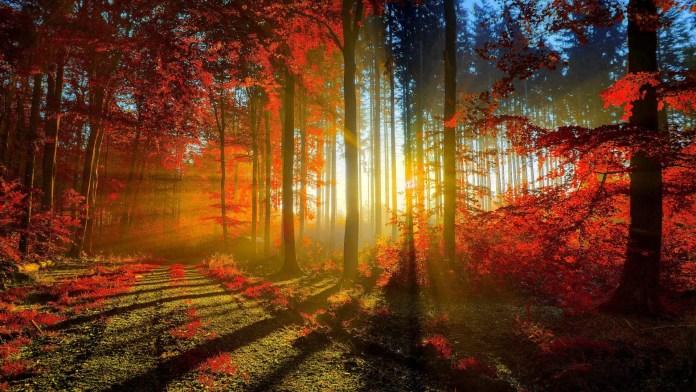 Sunrise HD Wallpaper For Iphone