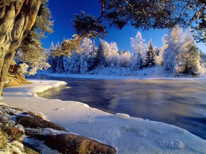 Winter Nature HD Wallpaper For Laptop