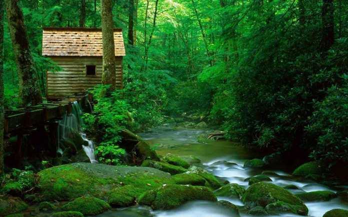 Green Nature HD Wallpaper For WideScreen