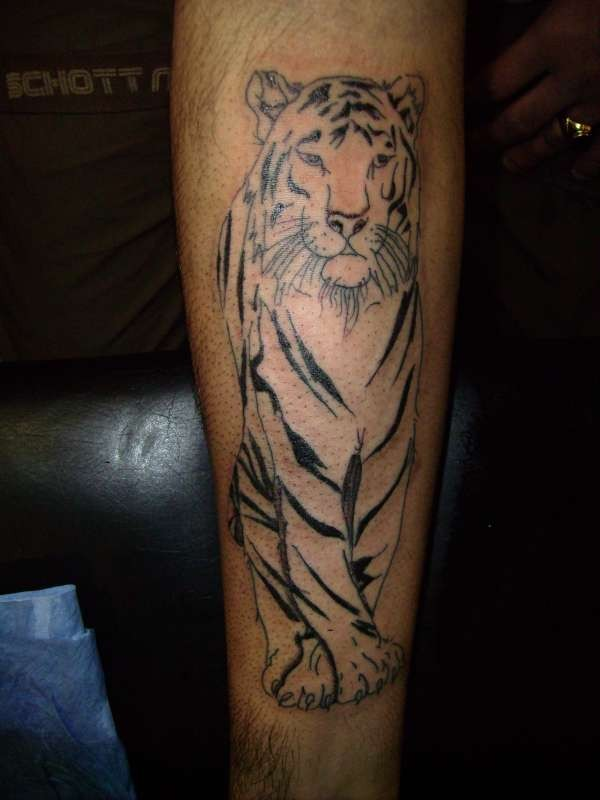 Tiger Calf Tattoo Design For Men