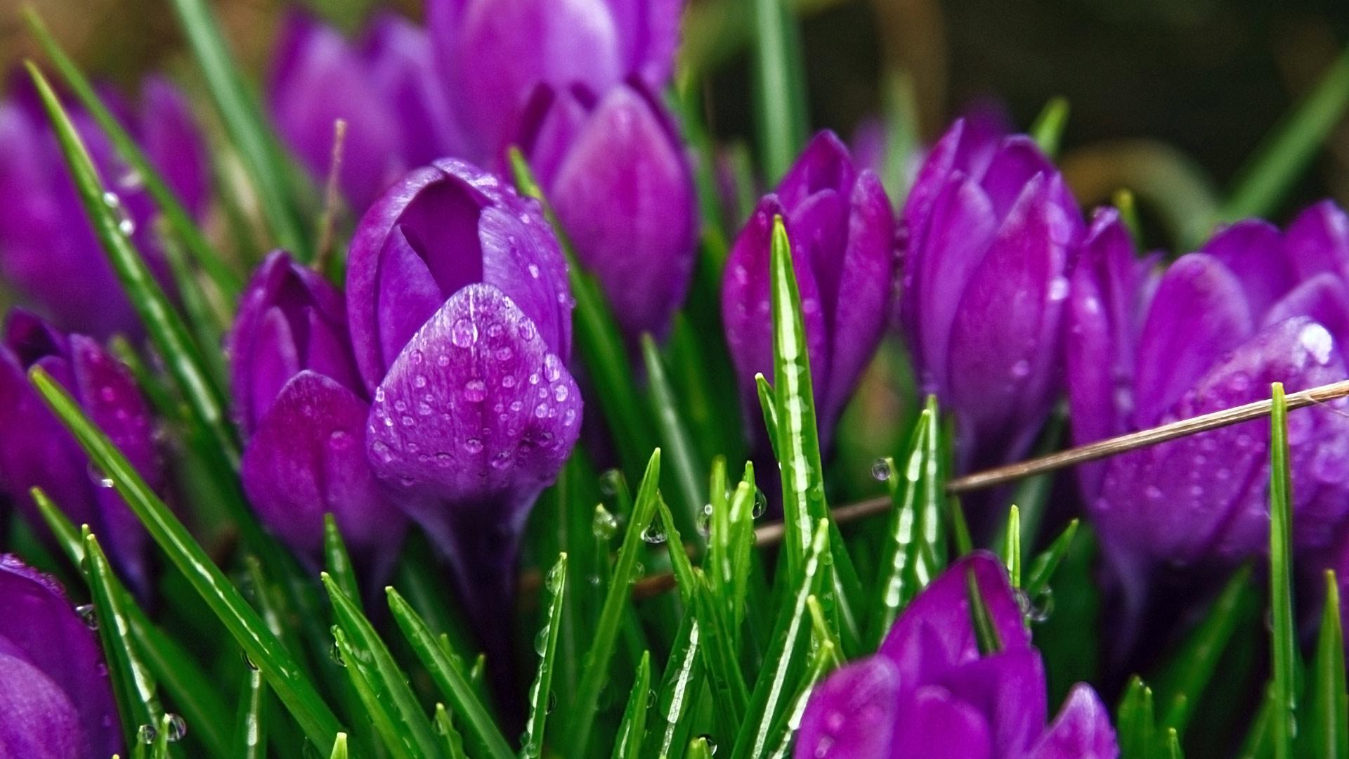 Beautiful wallpapers and images of flowers - Amazing Color Beautiful Wallpapers