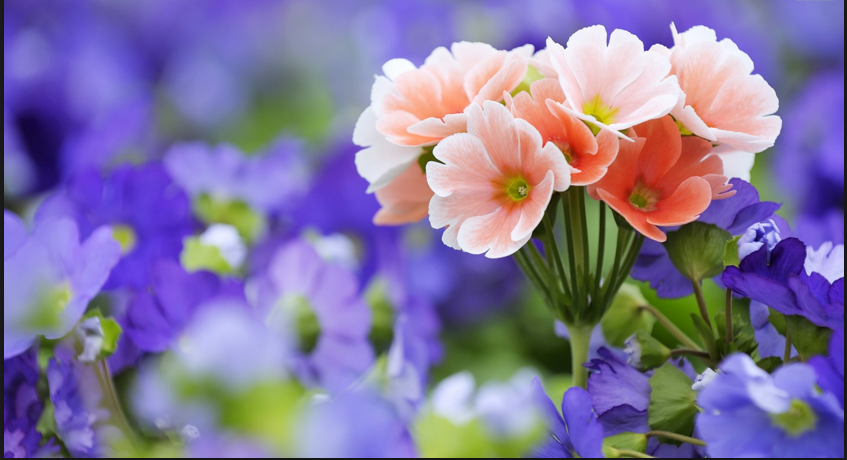 world's top  beautiful flowers images wallpaper photos free, Beautiful flower