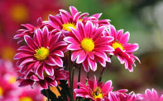 World S Top 100 Beautiful Flowers Images Wallpaper Photos Free Download
