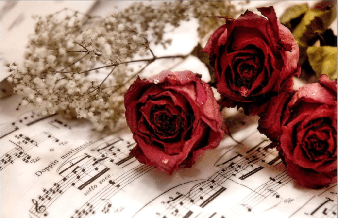 beautiful red roses images