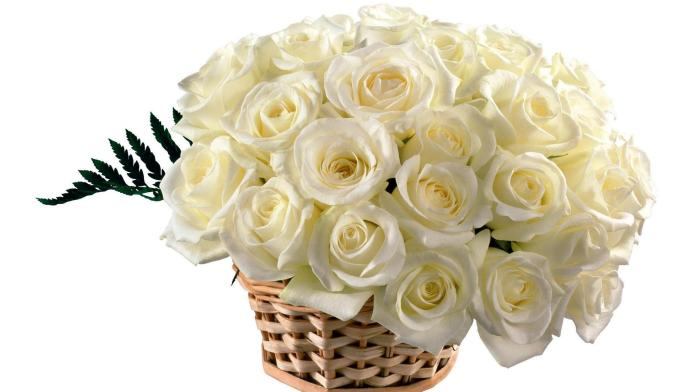 Worlds top 100 beautiful flowers images wallpaper photos free download white flower basket mightylinksfo