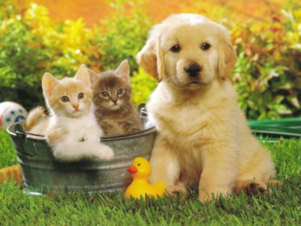 Cute Cats Dogs Wallpapers Images Free Download For Desktop Background
