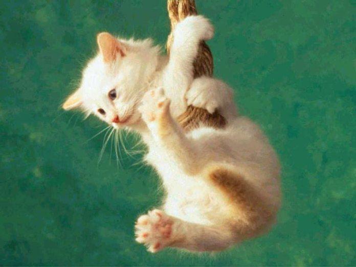 cat beautiful funny photos