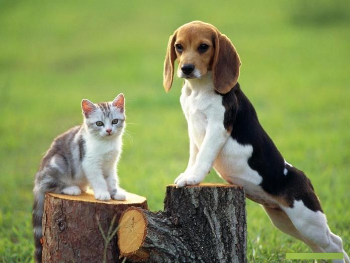 Dog Hd Wallpapers Free Download Cute Cats