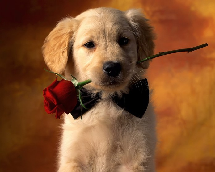 Cute cats dogs wallpapers images free download for desktop background cute dog valentines day wallpapers voltagebd Choice Image