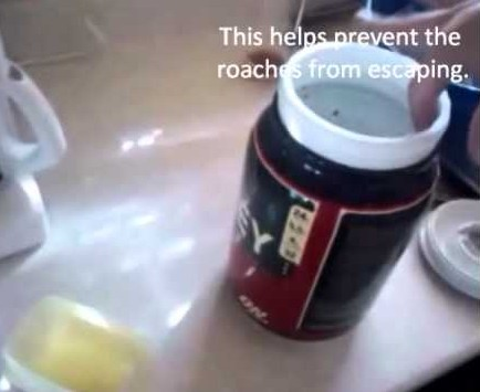 Coffee Grinds To Get Rid Of Cockroaches