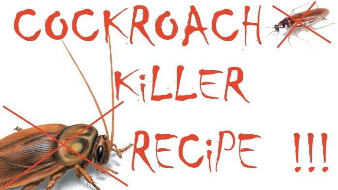 how to get rid of cockroaches with boric acid