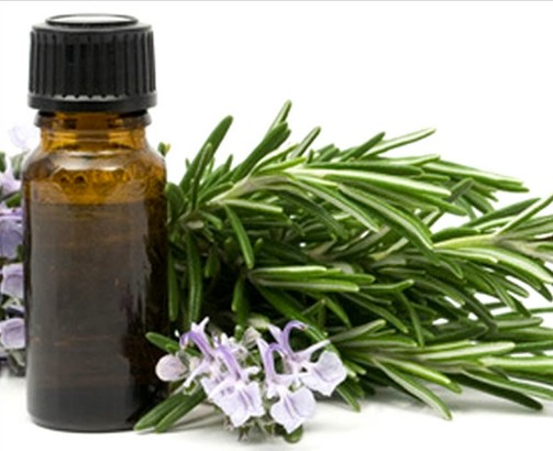 Eucalyptus Oil For Aromatherapy