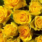 Top 30 Beautiful Yellow Flowers Names List With Pictures