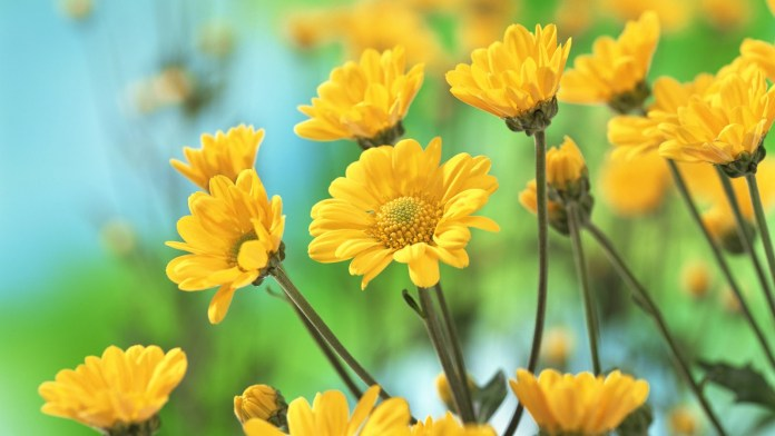 yellow flowers with names