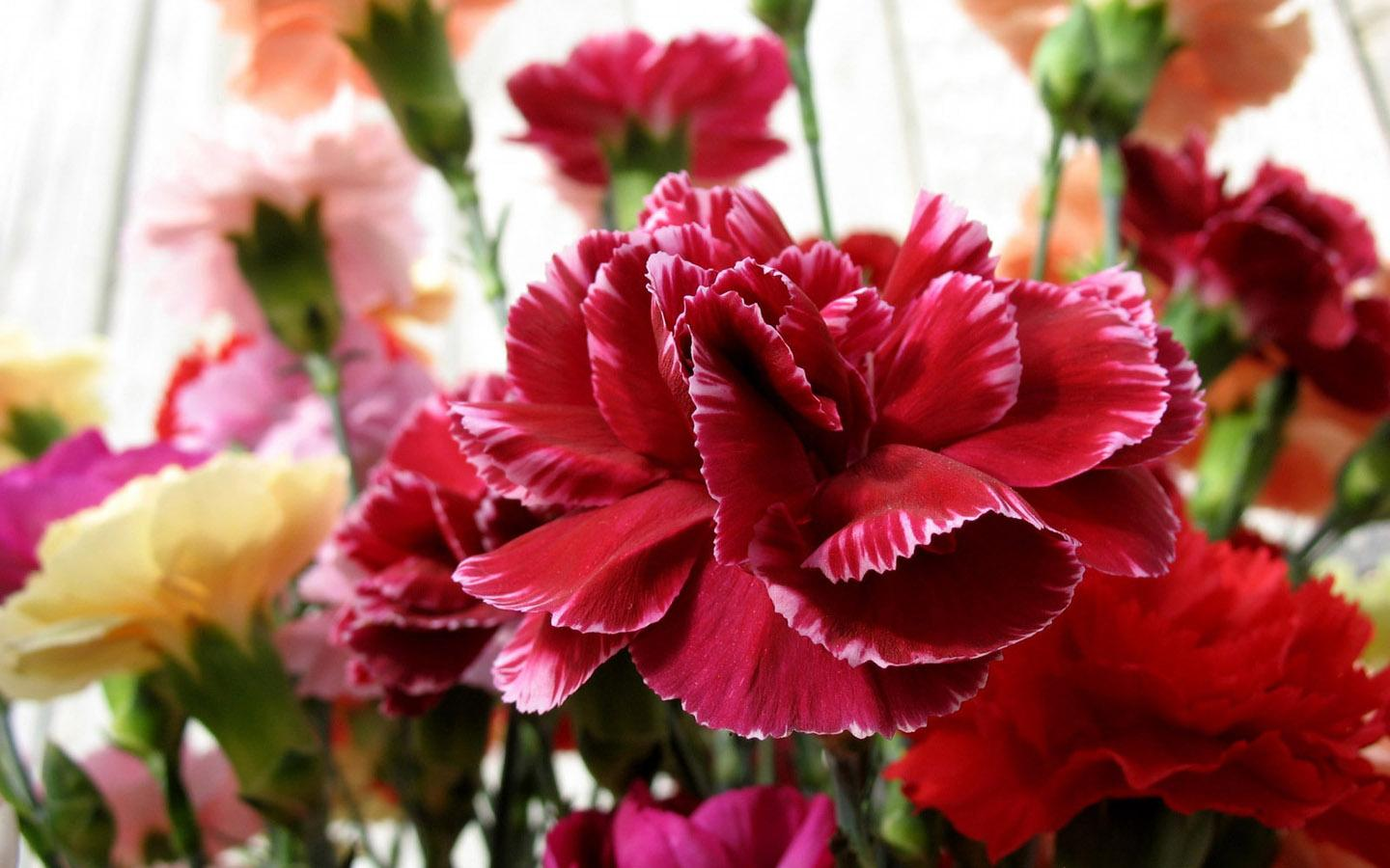 20 beautiful flowers you might fall in love with carnations flowers images most beautiful flowers in the world 12 dahlia flower izmirmasajfo