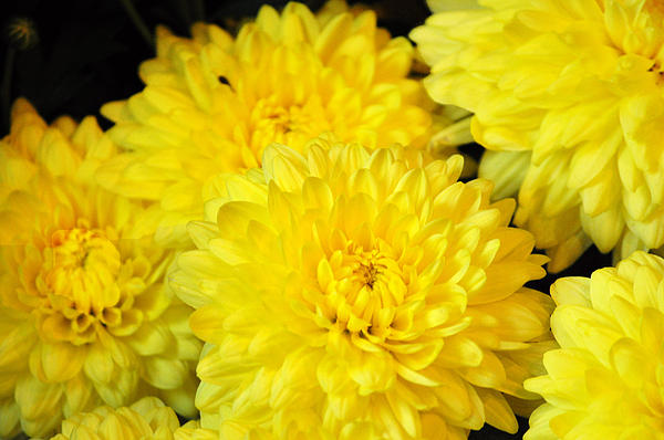 Top 30 beautiful yellow flowers names list with pictures youme and yellow flowers in the world mightylinksfo