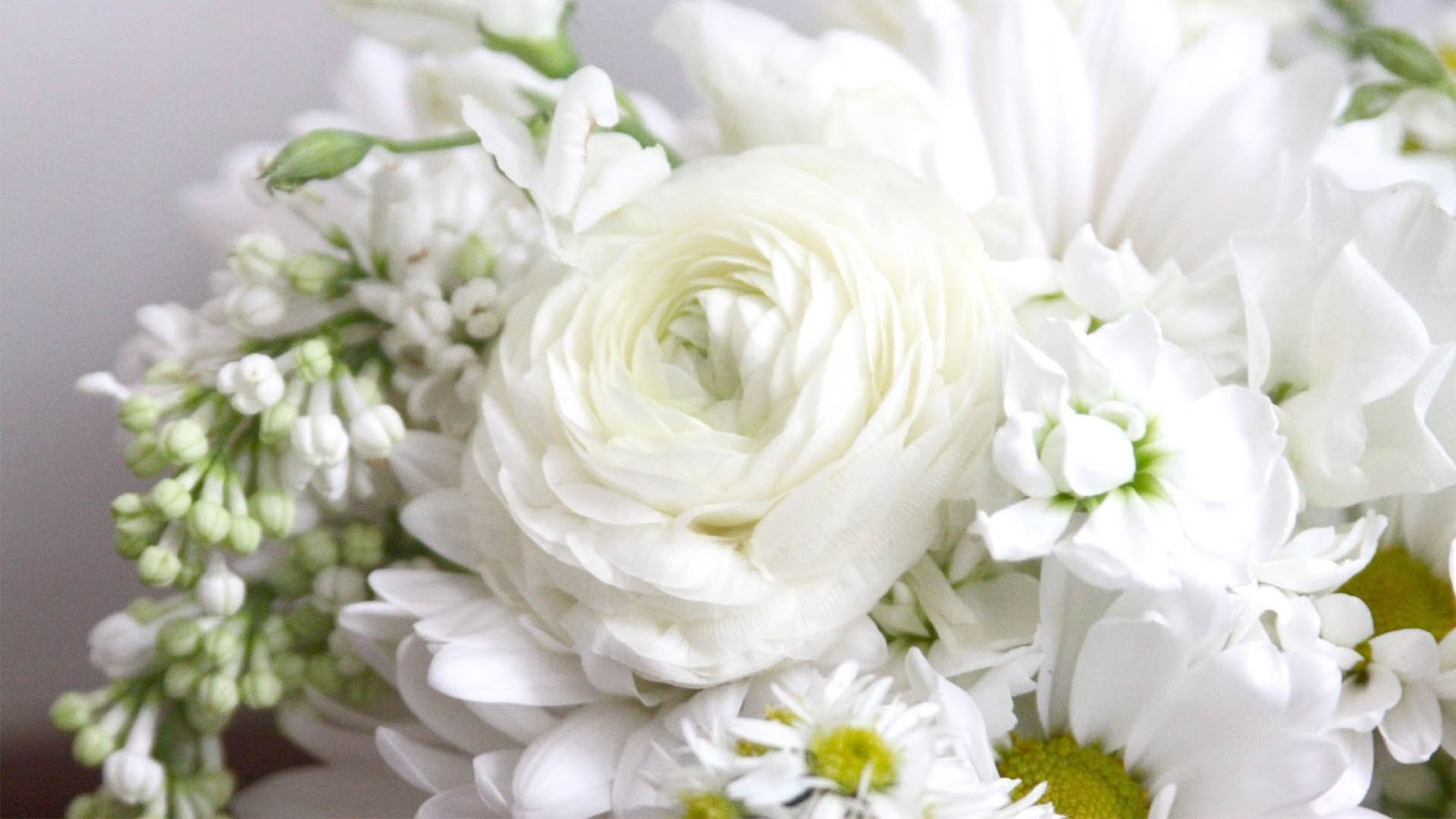 Best White Rose Flowers Wallpapers - Entertainment Only  |Beautiful White Rose Flowers