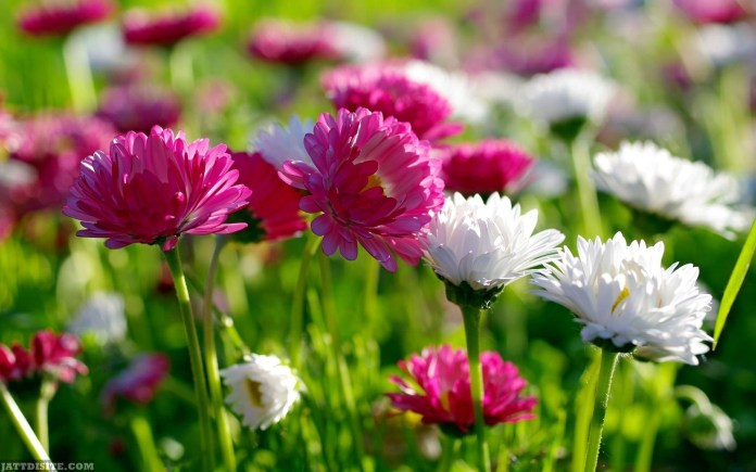 World's Top 100 Beautiful Flowers Images Wallpaper Photos ... - photo#44