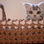 羊毛フェルト 猫人形作品