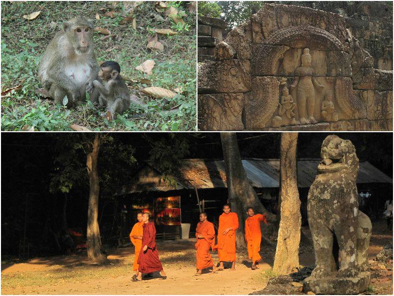 Monkeys and monks at Angkor Wat