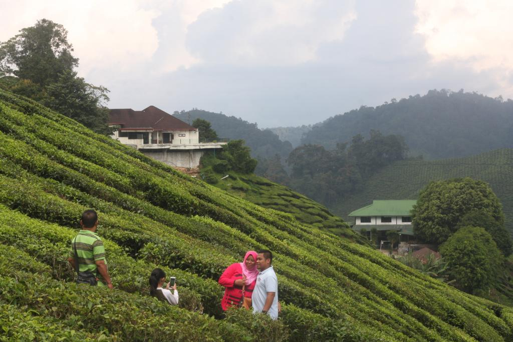 Malay family posing in tea plantation