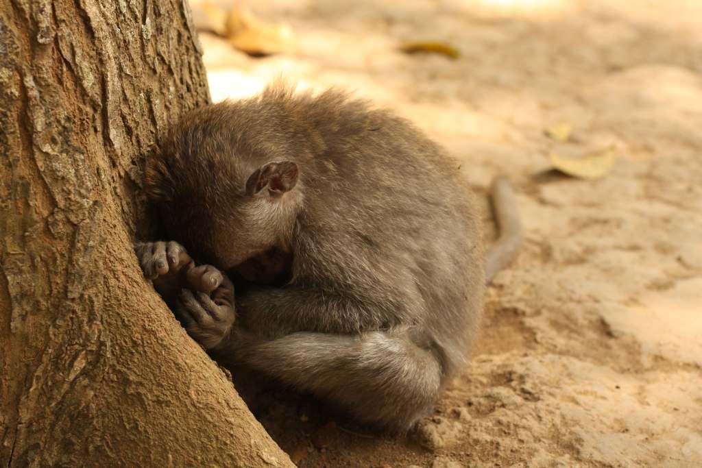 Monkey huddled in a ball next to tree