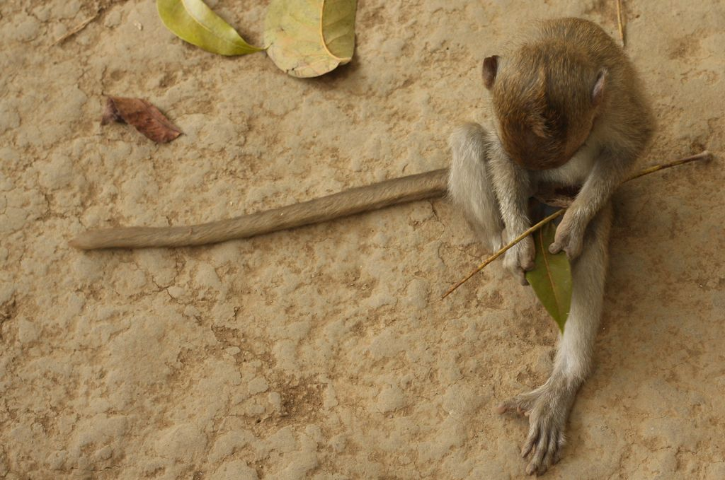 Monkey playing with sticks