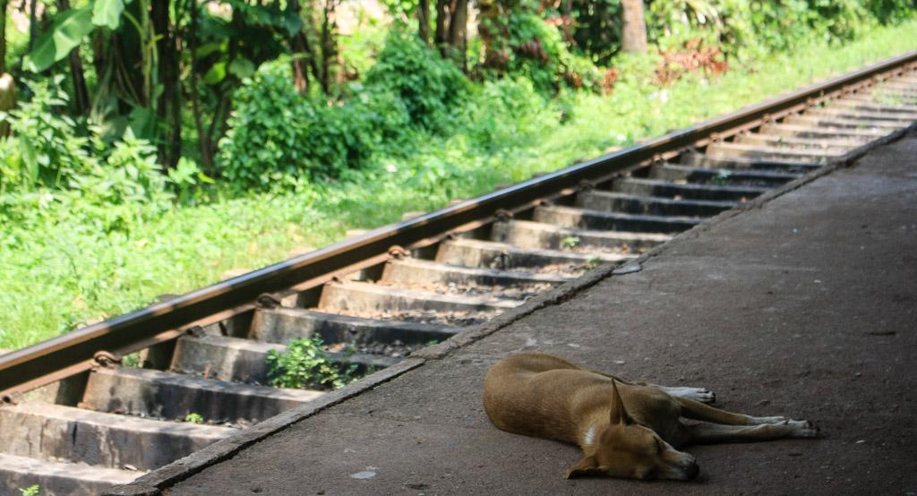 Train tracks in Sri Lanka