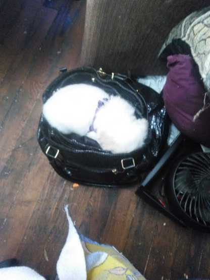 Cola Sleeping in my purse
