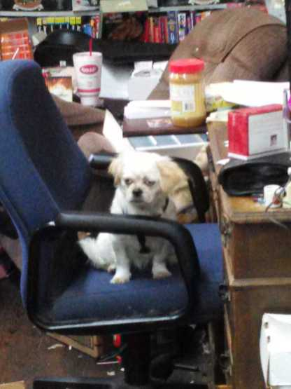Cola in my Chair