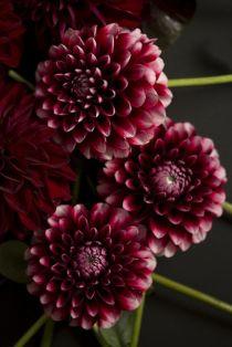 Flowers inspiration, Marsala color Trend