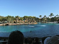 The Dolphin Show at Sea World