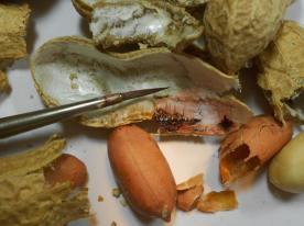 tiny-paintings-on-food-hasan-kale-02
